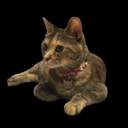 猫がいるポーセラーツ教室